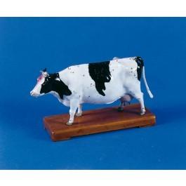 Akupunktur-Kuh
