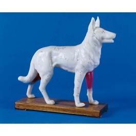 Akupunktur-Hund