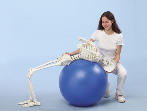 """Skelett """"Hugo"""" mit beweglicher Wirbelsäule"""