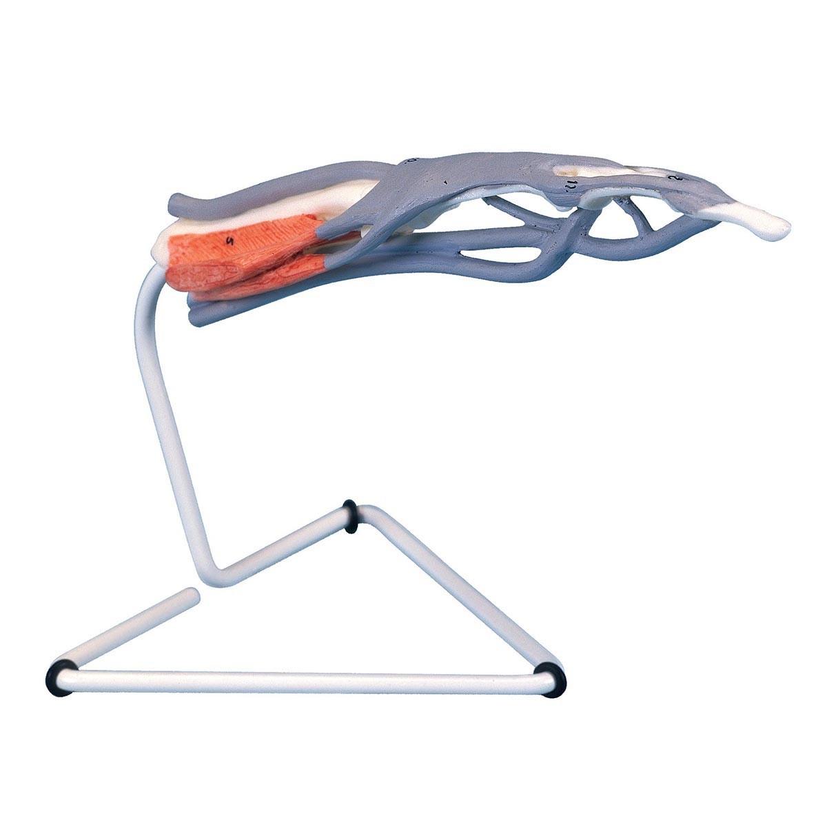 Finger-Struktur-Modell