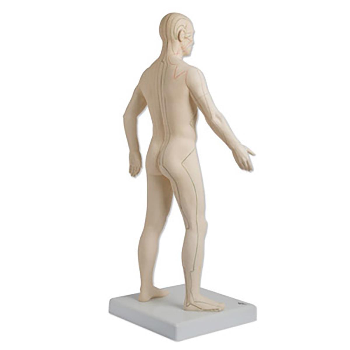 Akupunktur-Figur, männlich