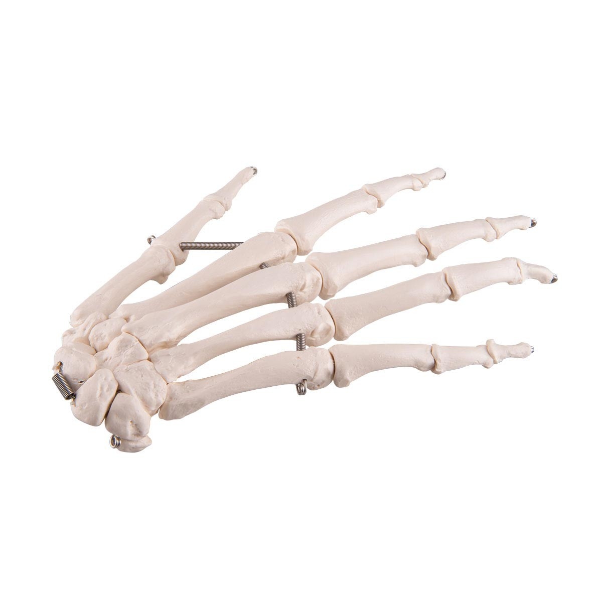 Handskelett auf Draht gezogen