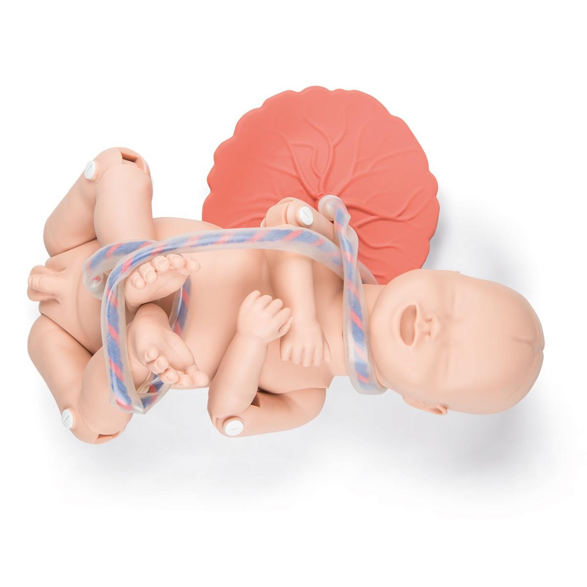 3B Scientific® P90 Geburtssimulator PRO
