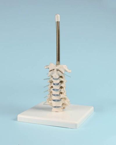 Schädelstativ Halswirbelsäule
