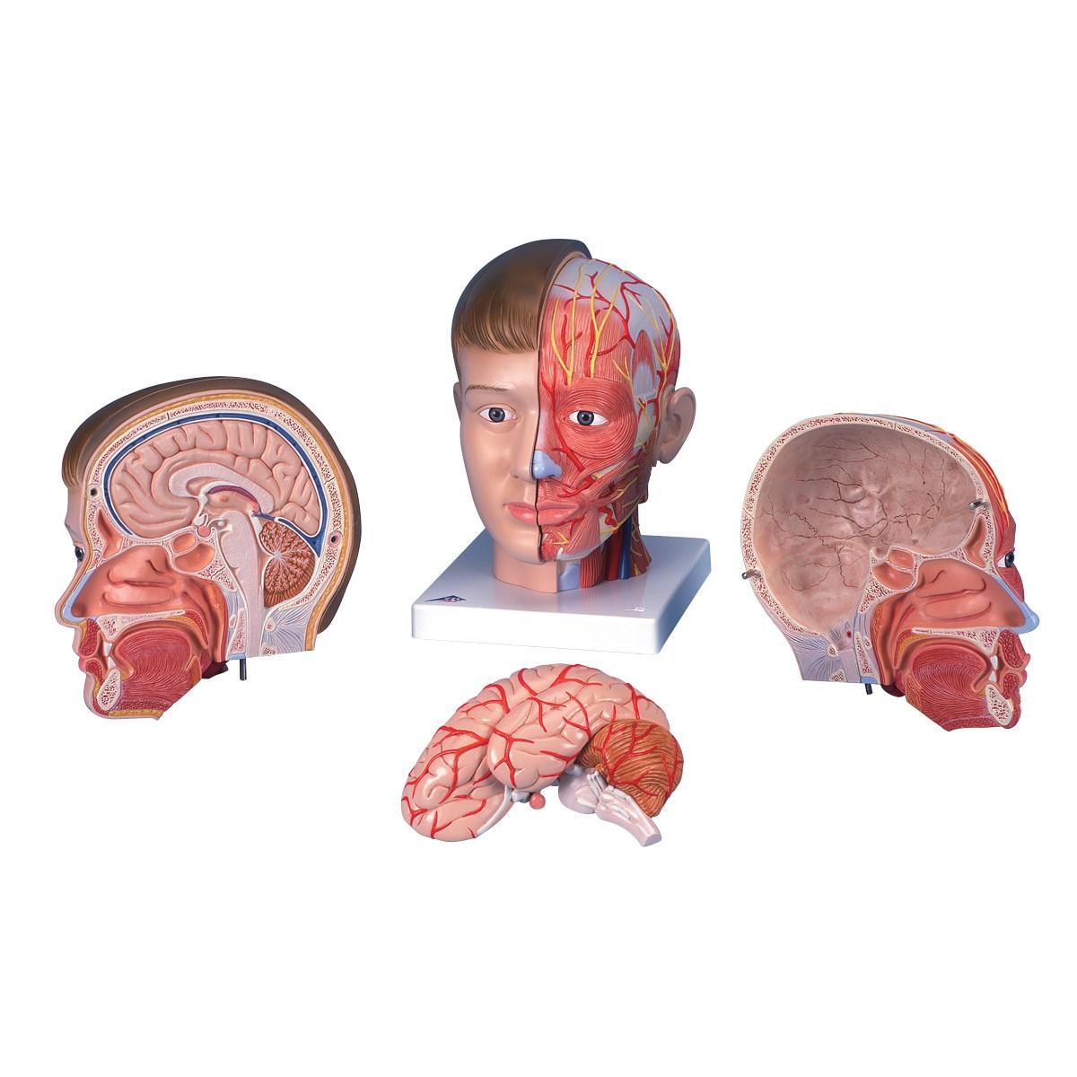 Kopf mit Hals, 4-teilig