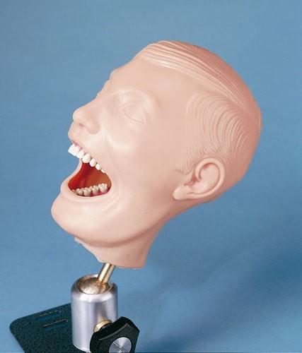 Dentalpuppe