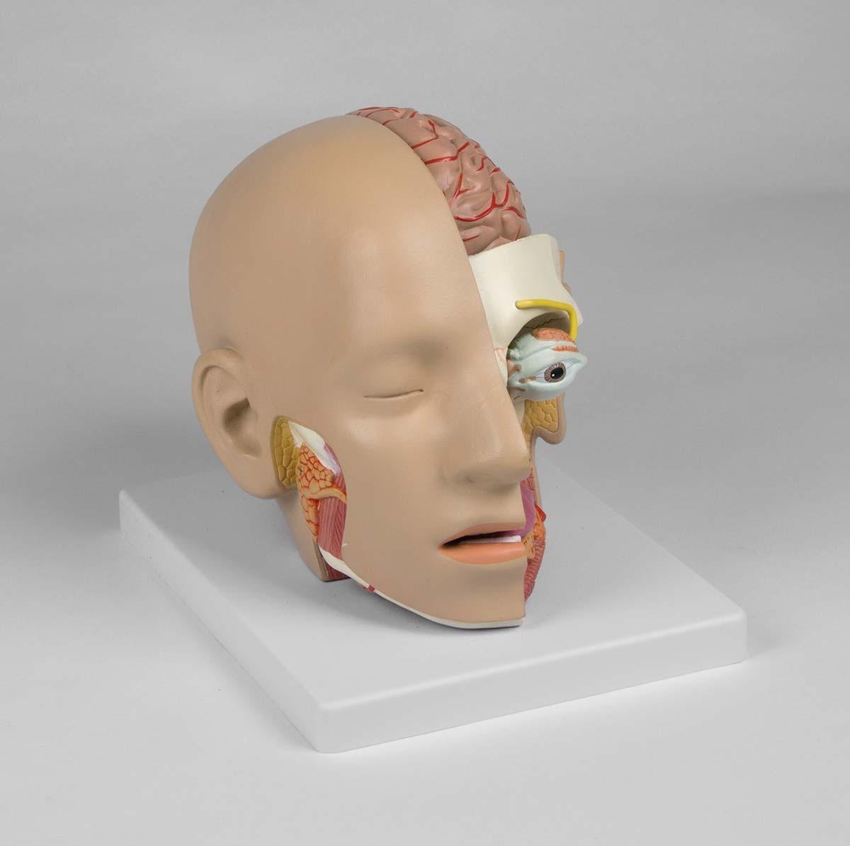 Kopf, zerlegbar, 4 Teile 1