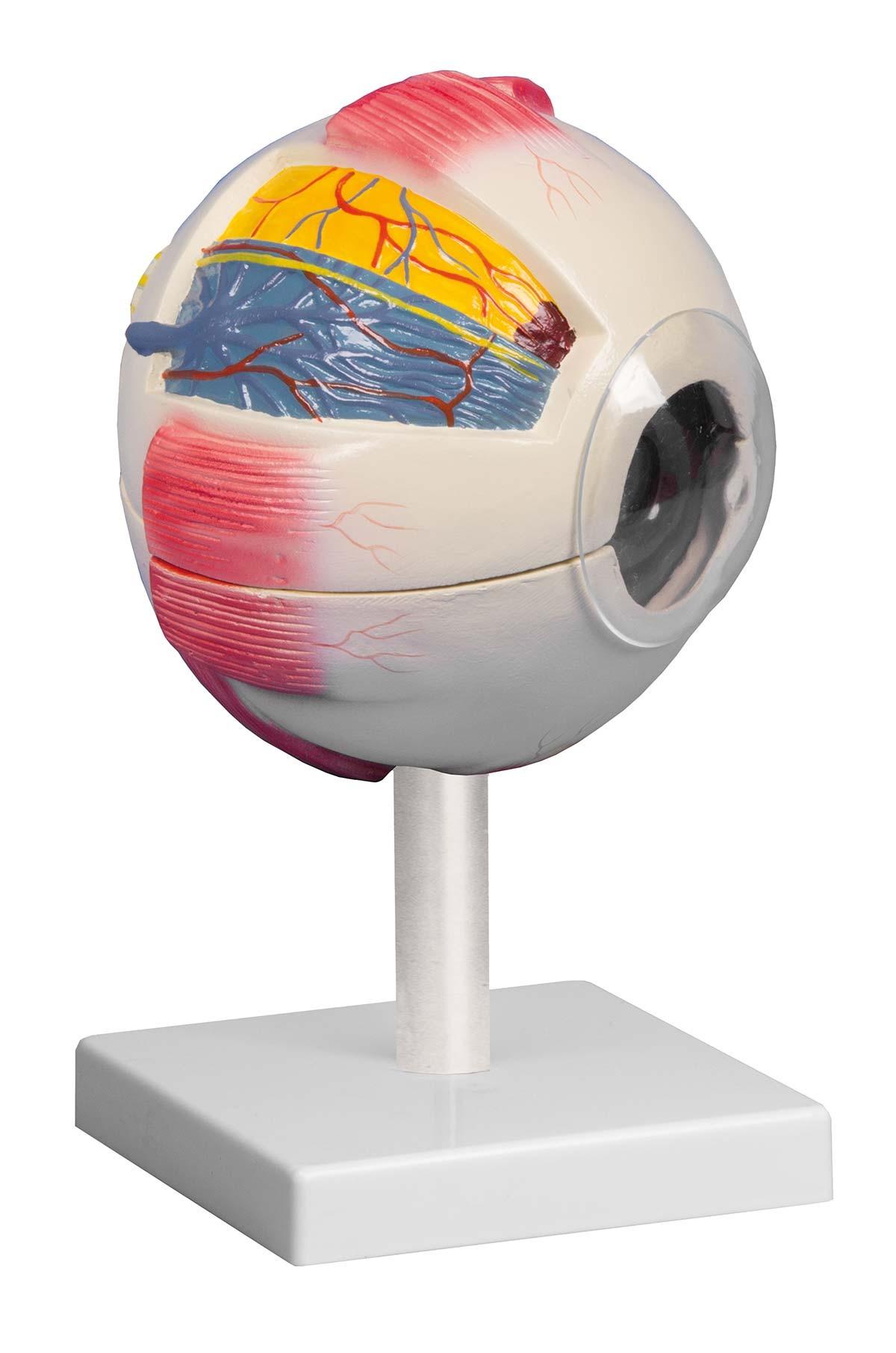 Auge, 6-fache Größe, 6-teilig 1