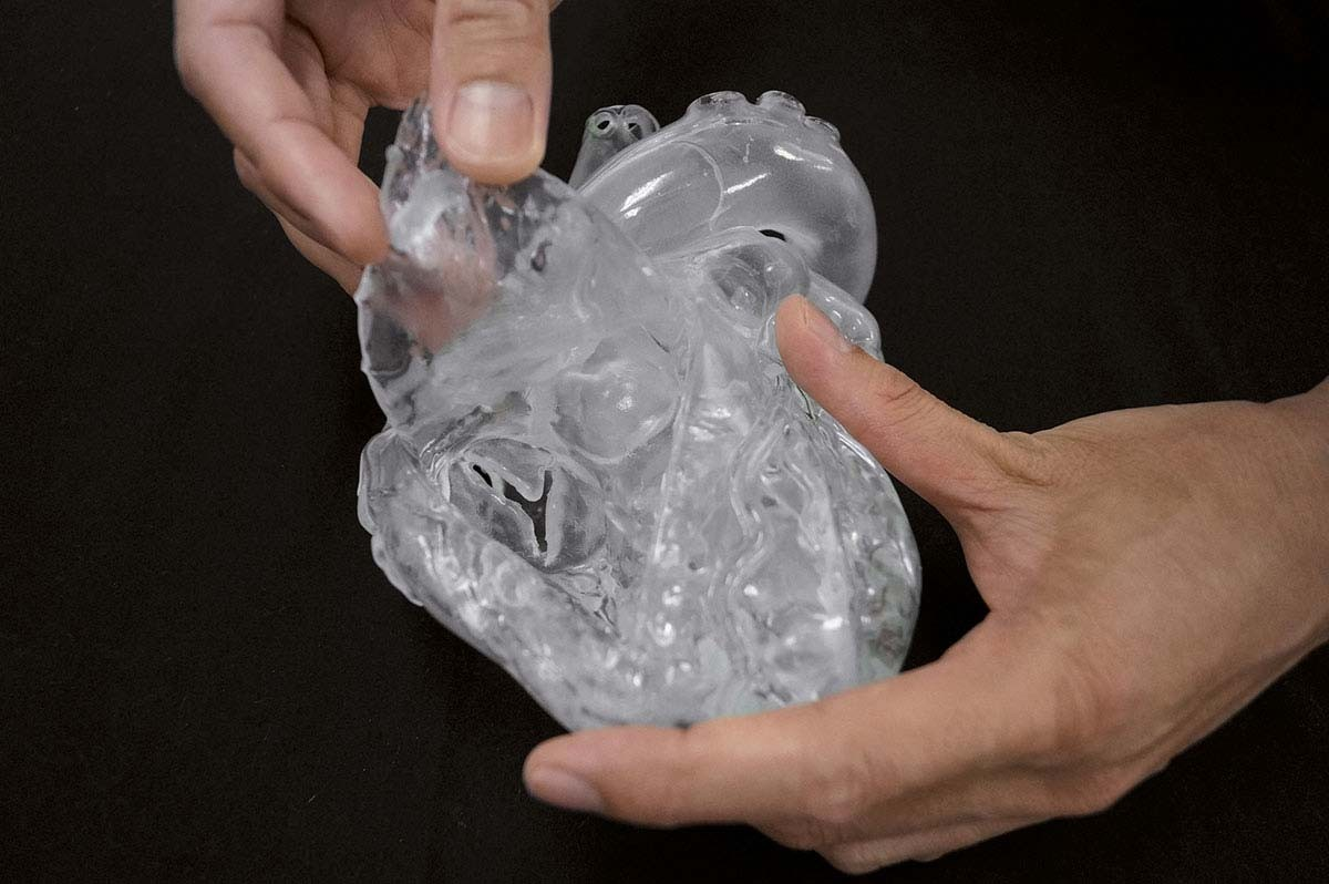 Herz flexibel, didaktische Ausführung, transparent 1