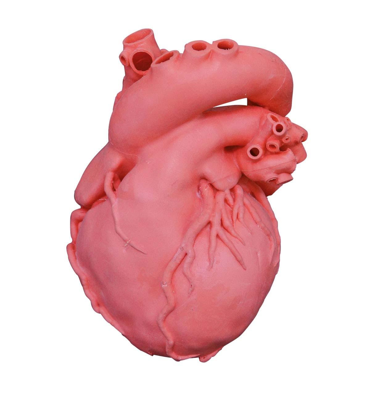 Herz Dicom komplex, rot 1