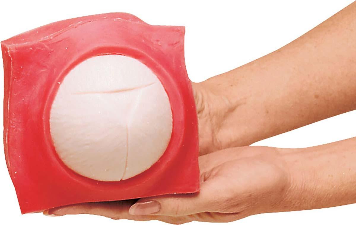Geburtsfortschritts- und Fetalüberwachungs-Modellset 1