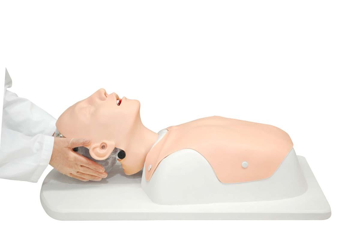 Bronchialbaum für Bronchofiberskopie für Simulator schwieriges Atemwegsmanagement