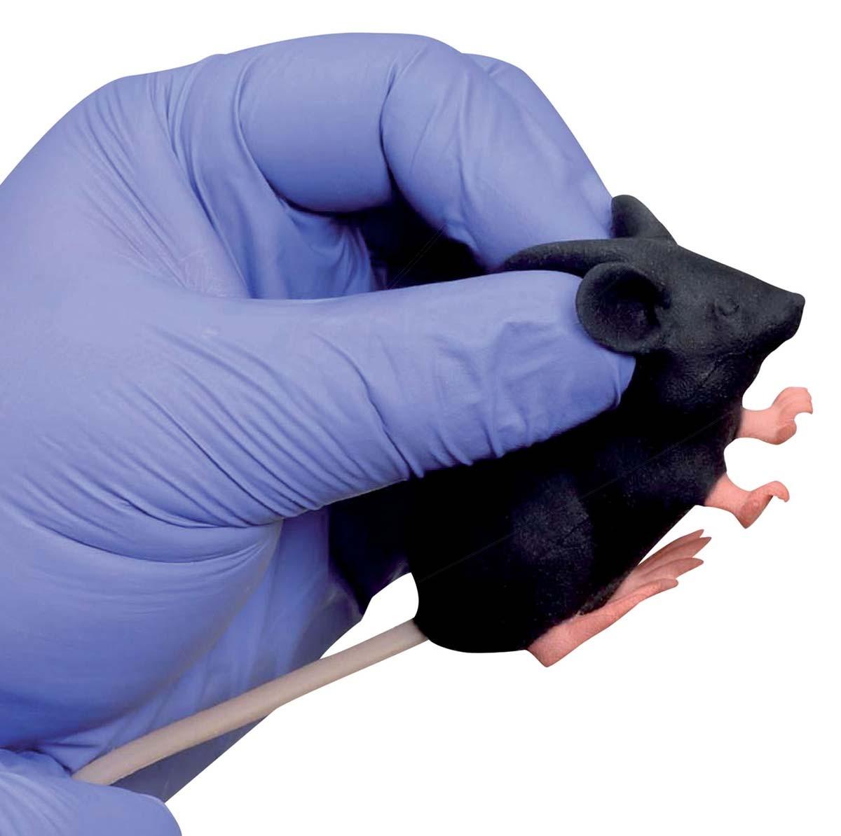 Mimicky Mouse 1