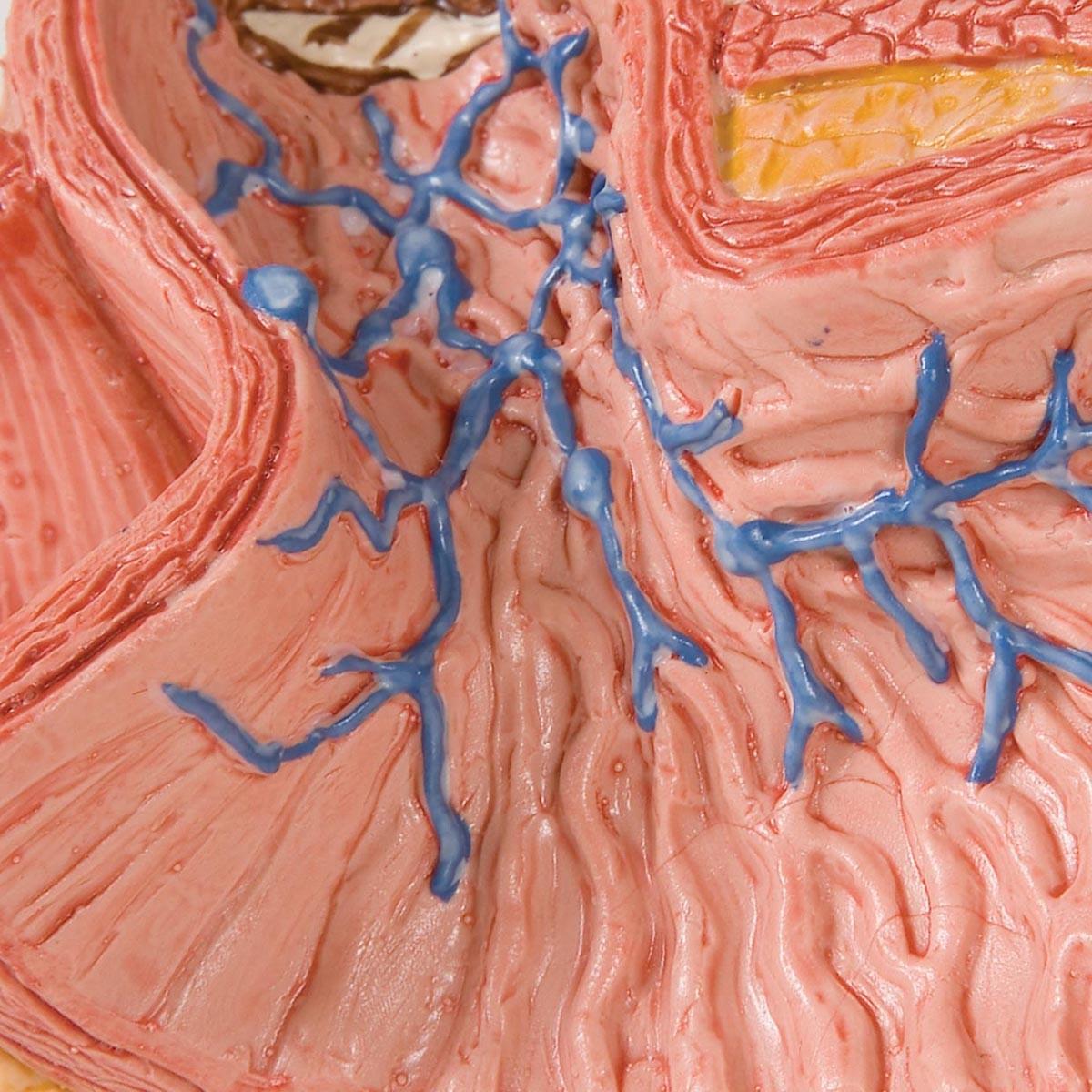 Erkrankungen der Speiseröhre