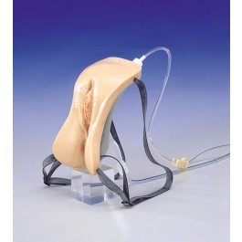 Weibliches Katheterisierungsmodell