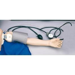 Blutdrucksimulator für Wiederbelebungspuppe Erwachsener