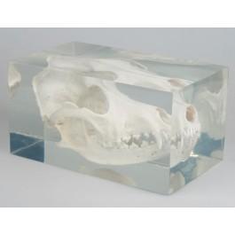 Echter Hundeschädel in Kunststoffblock