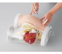 Modell Hüftanatomie/Injektionstechnik i.m.