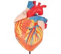 Herz, 2-fache Größe, 4-teilig