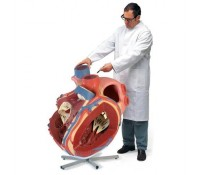 Riesen-Herz, 8-fache Größe