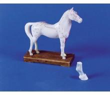 Akupunktur-Pferd