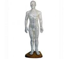 Basis Akupunkturmodell, männlich