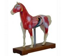 Akupunkturmodell Pferd