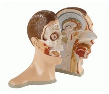 Kopf und Nacken, 5-teilig
