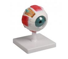 Augenmodell, 4-fache Größe, 6-teilig