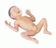 Frühgeborenen-Modell, 30 Wochen alt