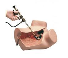 Gynäkologischer Simulator