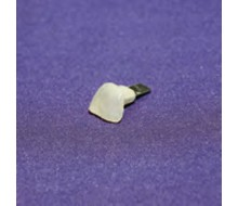 Zehennagel, Nagelpilz, 20er Set für Übungsmodell medizinische Fußpflege