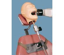 Dental-Röntgen-Puppe