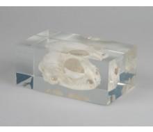 Katzenschädel in Kunststoffblock