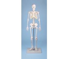 Miniatur-Skelett Tom 1
