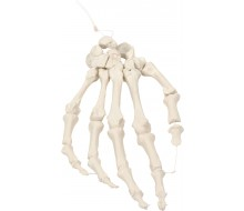 Handskelett auf Nylon