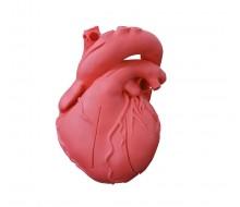 Herz flexibel, didaktische Ausführung 1