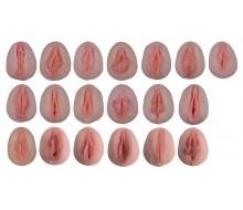 Vulva-Abdrücke mit vergleichender Anatomie