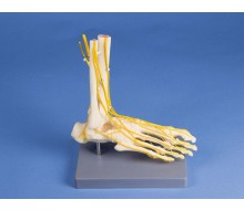 Neuro-Fuß 1