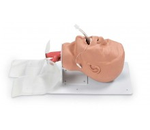 """Erwachsenen - Intubationstrainer """"Economy"""" auf Grundplatte"""