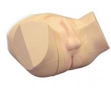 Prostata und rektaler Untersuchungssimulator 1