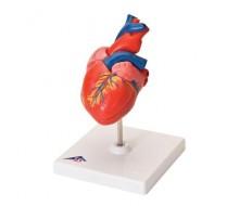 Klassik-Herz, 2-teilig