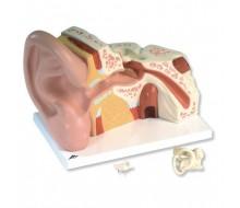 Riesen-Ohr, 5-fache Größe, 3-teilig