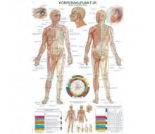 "Lehrtafel ""Körperakupunktur"""