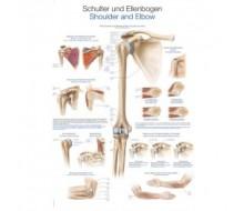 """Lehrtafel """"Schulter und Ellenbogen"""""""