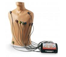 15-Kanal-EKG-Platzierungstrainer
