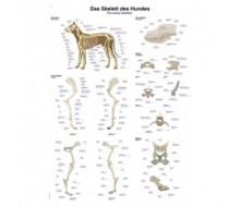 """Lehrtafel """"Das Skelett des Hundes"""""""