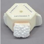 Prostata und rektaler Untersuchungssimulator 3