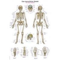 anatomische-lehrtafel-kaufen