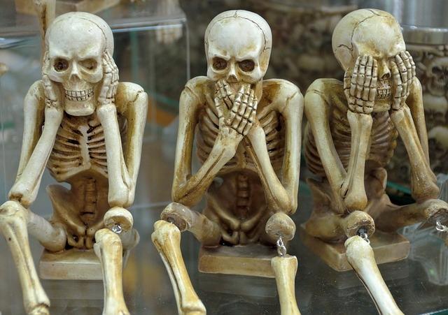 skelett-kaufen-ratgeber